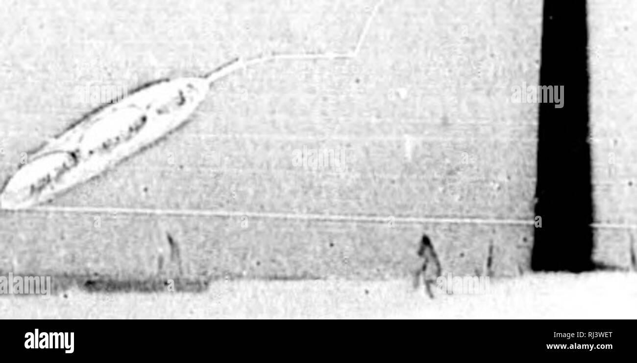 . Viaje político-científico alrededor del mundo [microform] : por las corbetas Descubierta y Atrevida al mando de los capitanes de navío D. Alejandro Malaspina y Don José de Bustamante y Guerra, desde 1789 á 1794. Descubierta (Corvette); Atrevida (Corvette); Descubierta (Corvette); Atrevida (Corvette); Voyages around the world; Scientific expeditions; Voyages autour du monde; Expéditions scientifiques. f CORBETAS DESCUBIERTA Y ATREVIDA 29 que duerme libre de su guardia, 6 atrasar y á veces contrarestar los buenos efectos de una ma- niobra. Las ideas son unas en todos los hombres: la comparació - Stock Image