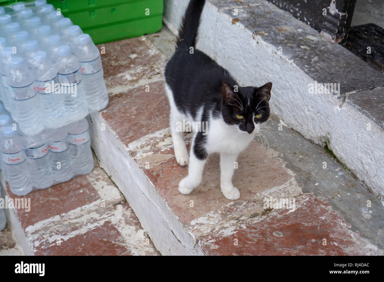 Cats that are obviously happy are everywhere on Hydra Island. The locals take very good care of them & the felines reciprocate with affection. - Stock Image