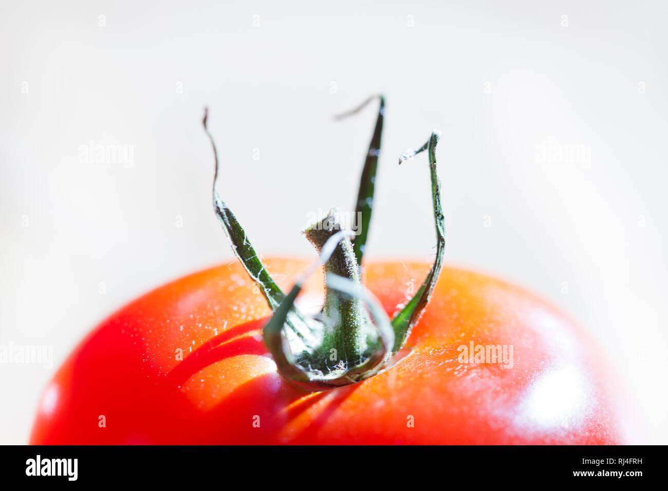 Tomate, Freisteller - Stock Image