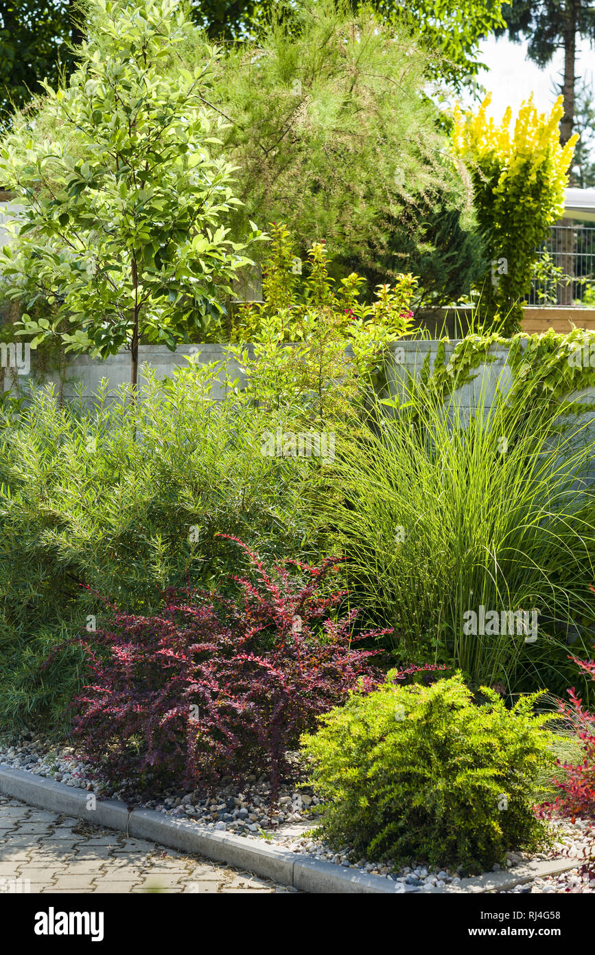 Various Types Of Shrubs And Conifers In The Front Garden Stock