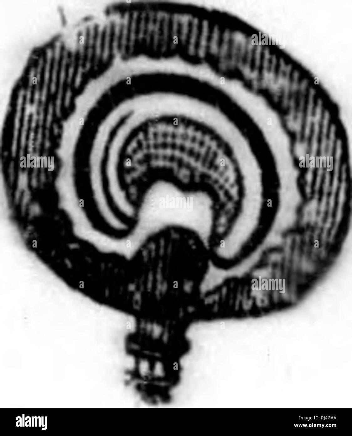". Cours élémentaire de botanique et flore du Canada à l'usage des maisons d'éducation [microforme]. Botanique; Plantes; Botany; Plants. 183. ^ ,9 I «7 US. Fleur pislillée. 184. Kruit. 185. Deux fruita coupas transTersa"" lement lesecond jusqu'il «ado- oarpe exclusivement. 180. Fruit uuupé longitudinaUment. Wl. (iraine. 188,. Smbryon courbe. - imiMi»ijiciiiiii>Jinn it><?nii .H''u>i-»J»!ii6»aiMMiiig»eiaew Ler'''(''.'i.it]iMonlre«l.. Please note that these images are extracted from scanned page images that may have been digitally enhanced for readability - coloration and appearanc - Stock Image"