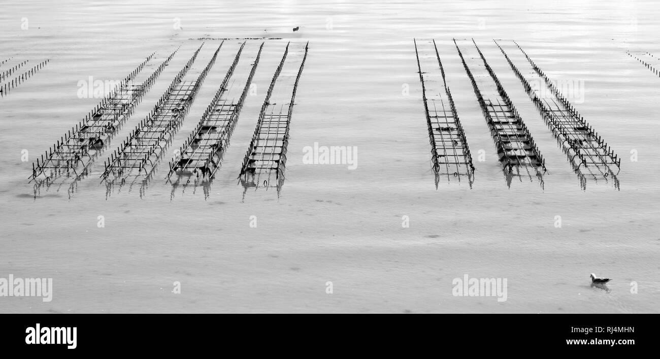 Austernzucht in der Bretagne Stock Photo