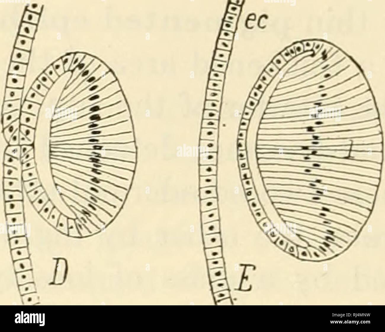The Chordates Chordata Basic Structure Of Ertebrates Fig 173