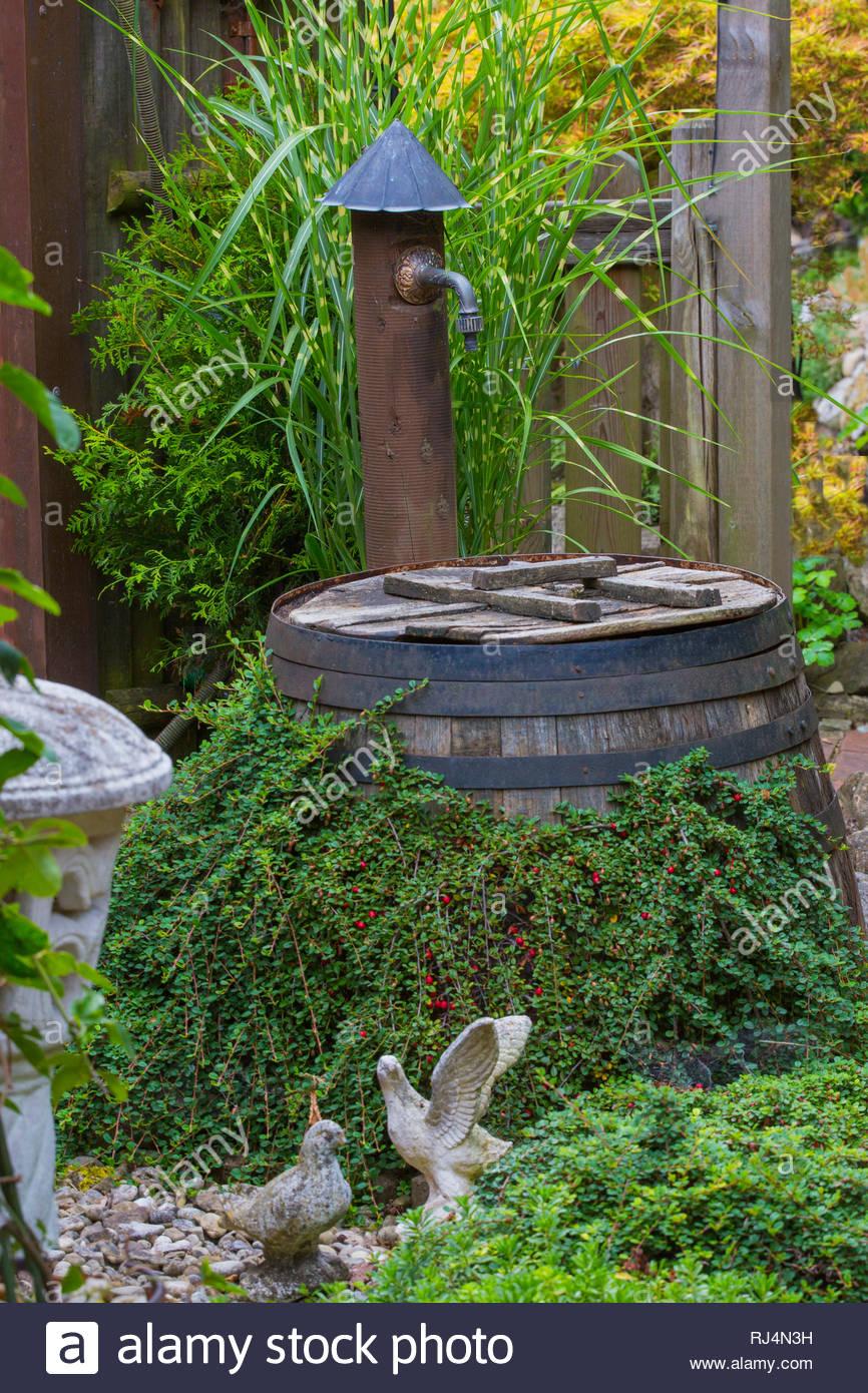 Altes Holzweinfass Als Regentonne Mit Grunpflanzen