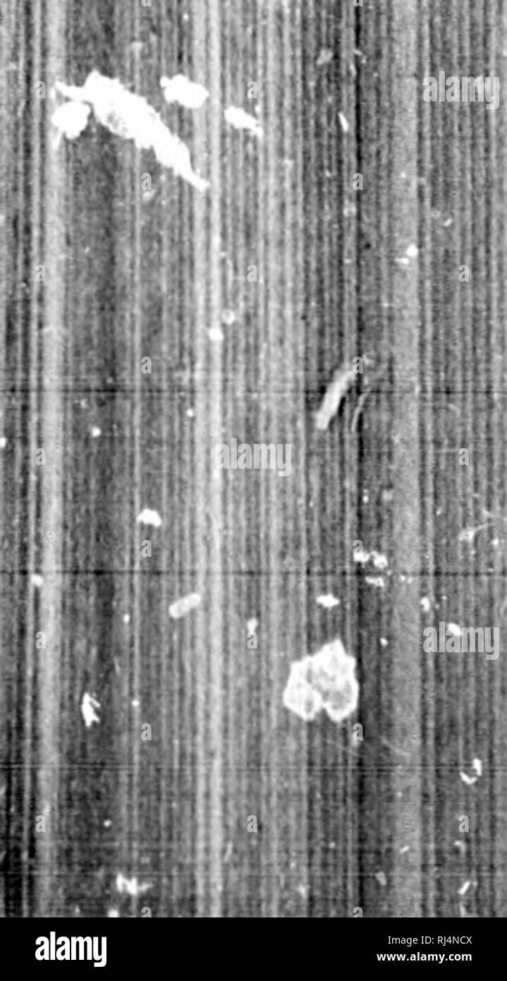 ". Monographs of North American rodentia [microform]. Rodentia; Paleontology; Rongeurs; Paléontologie. !l n. Vlir. TOWNSENDI. Townsend's Chipmunk, Ta.miat loumiievdi Baciiman, Journ. Acad. Niit. 8oi. Phila. viii, 1Â«19,68; TownsendV NirroUve, ia39,321.â Waonkr, WieKinanii's Arcliiv, 184:1, pt. ii, 44.âAudubon & Baciiman, Quad. N. Am. i, 1849, l.W, pi. XX.âBaihd, Mam. N. Am. 1857, ;Â«X), pi. xlv, fig. 4 (skull); pi. v, tig. 2 ("" var. cooperi""; animal).âCooPRR, Nat. Hist. VaÂ«li. Territory, pt. iii, 1859, 80.âSucklky, ib. 97, 122.â Gkay, Ann. and Mag. Nat. Hist. 'M sur. xx, 18()7, - Stock Image"