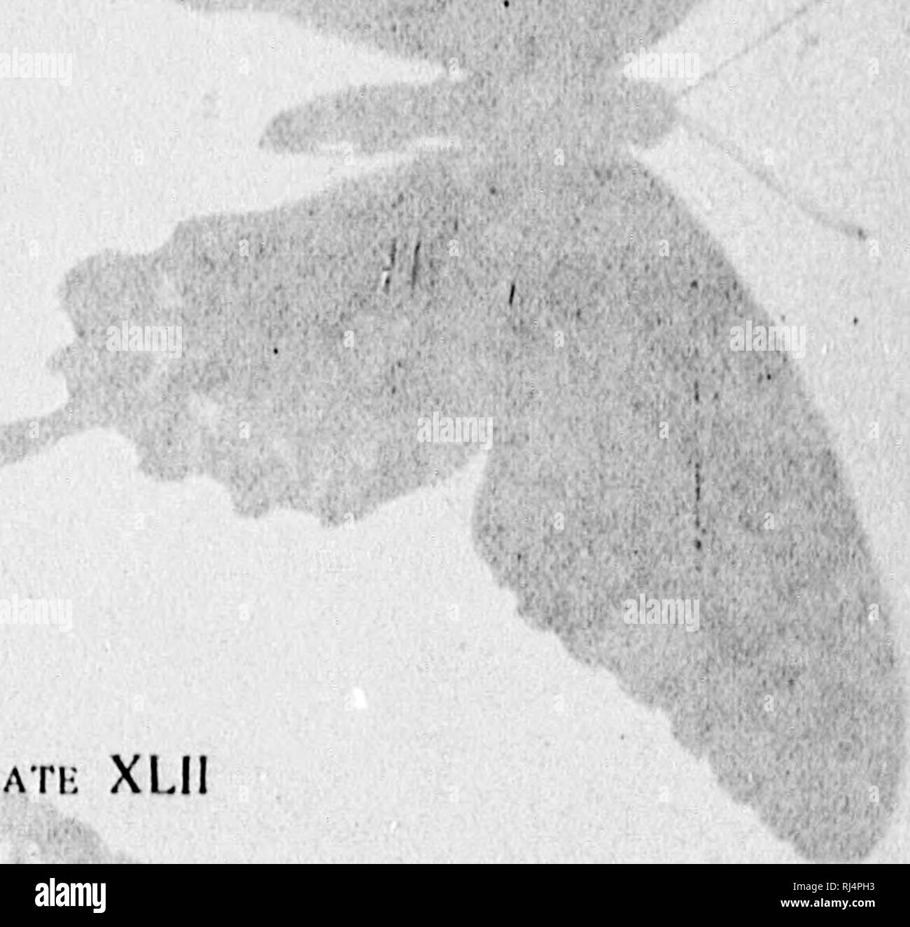 """. The butterfly book [microform] : a popular guide to a knowledge of the butterflies of North America. Butterflies; Papillons. Iffir. f""""PH Â«*â -"""" HXI'I.ANATION OK I'l.ATi; XLII. 1. Piipilio l^ahmedes, Drury, 9- 3 Pjpilio phih'itiir, Linnaeus, -f. ?. Papilio cresphoiili-^, (Irnmer, (^. /(. Piipilin tboas, Liniia-us, â ^. """"v't. Please note that these images are extracted from scanned page images that may have been digitally enhanced for readability - coloration and appearance of these illustrations may not perfectly resemble the original work.. Holland, W. J. (William Jacob), 184 - Stock Image"""