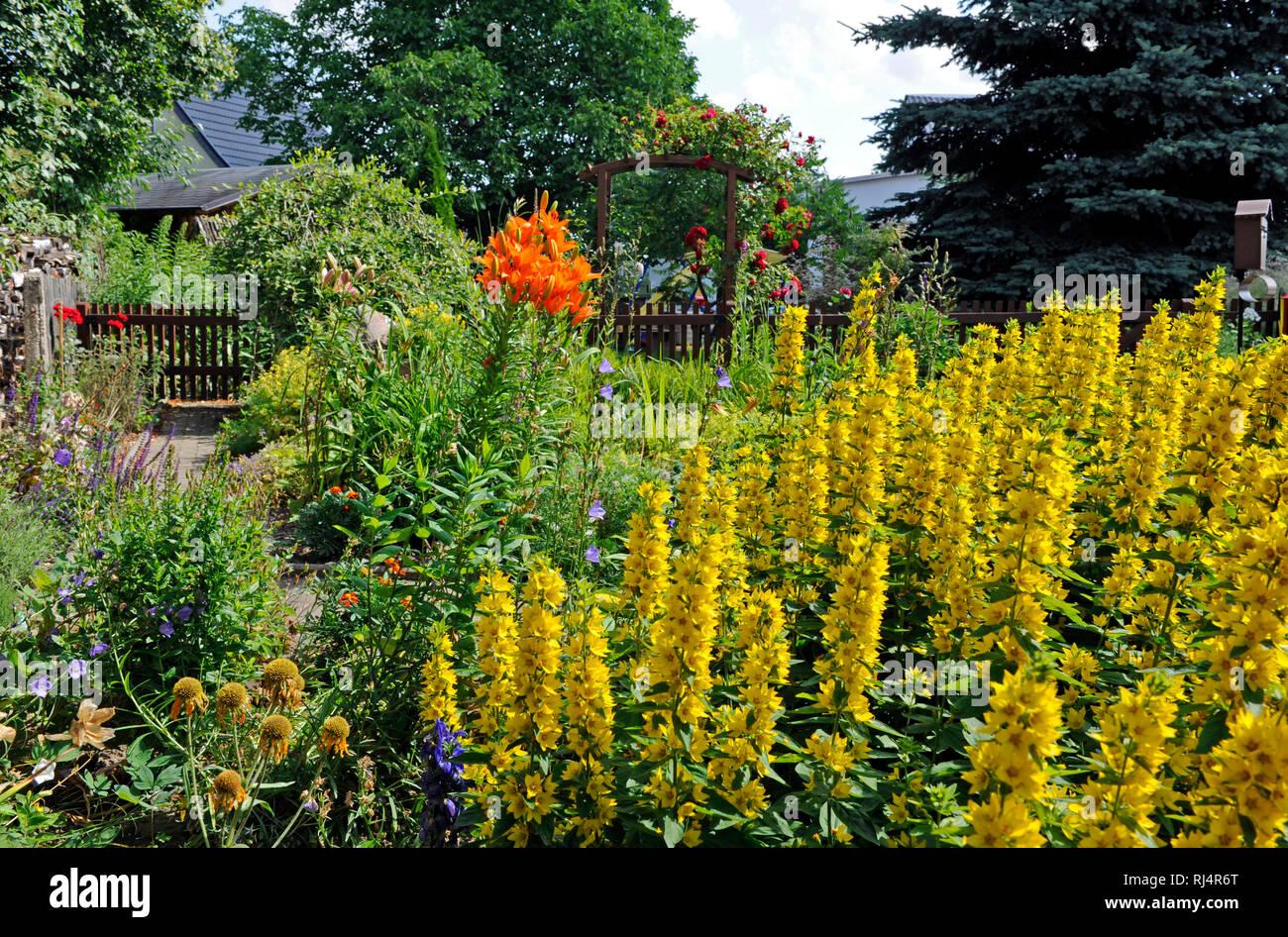 Romantischer Bauerngarten mit bl?henden Sommerblumen und Zierstauden, Stock Photo