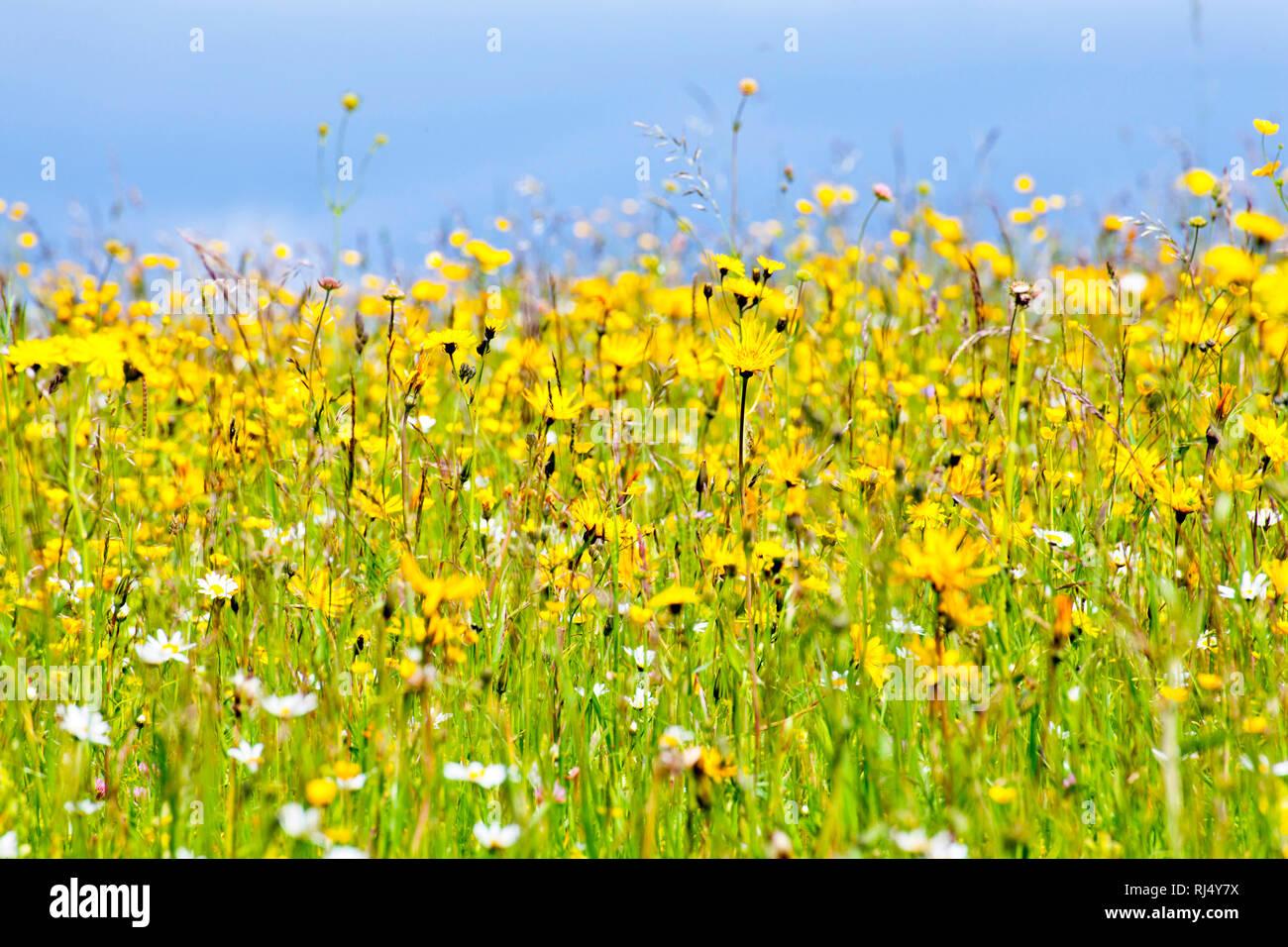 Blumenwiese im Fr?hjahr - Stock Image