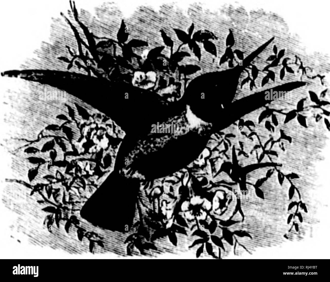 Lilack Black and White Stock Photos & Images - Alamy