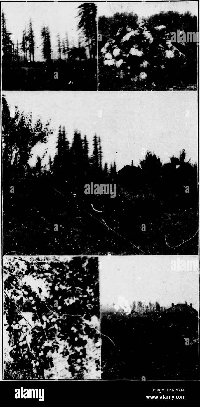 Lau Lau Black and White Stock Photos & Images - Alamy