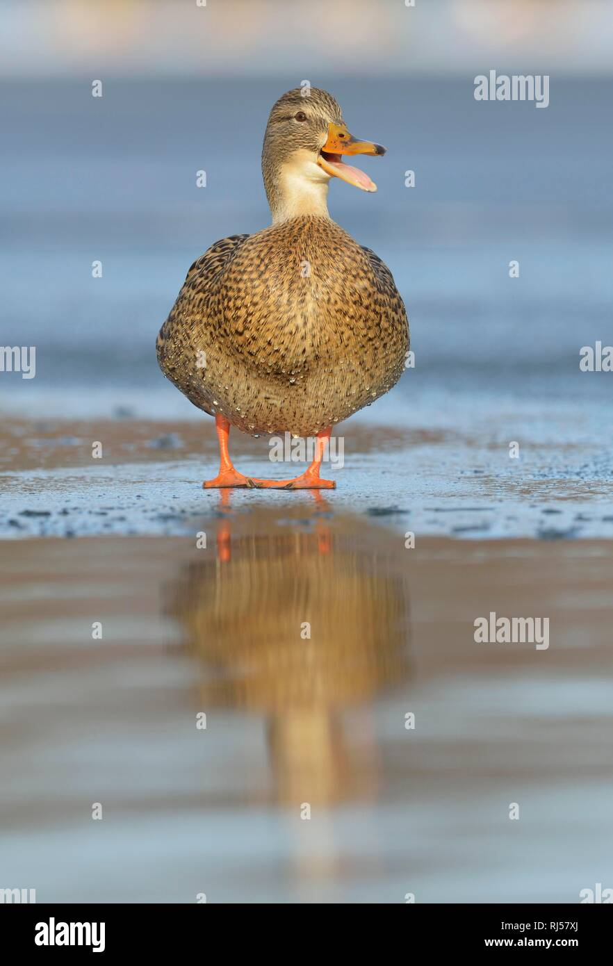Chattering Stock Photos & Chattering Stock Images - Page 2