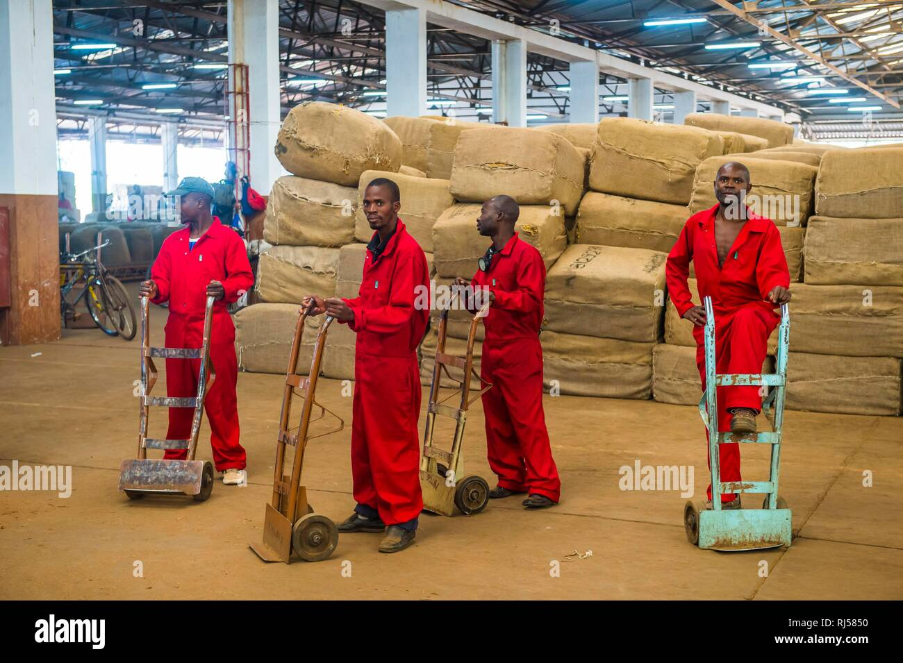 Sacks of dried tobacco leaves in a hall and local workers on a Tobacco auction, Lilongwe, Malawi - Stock Image