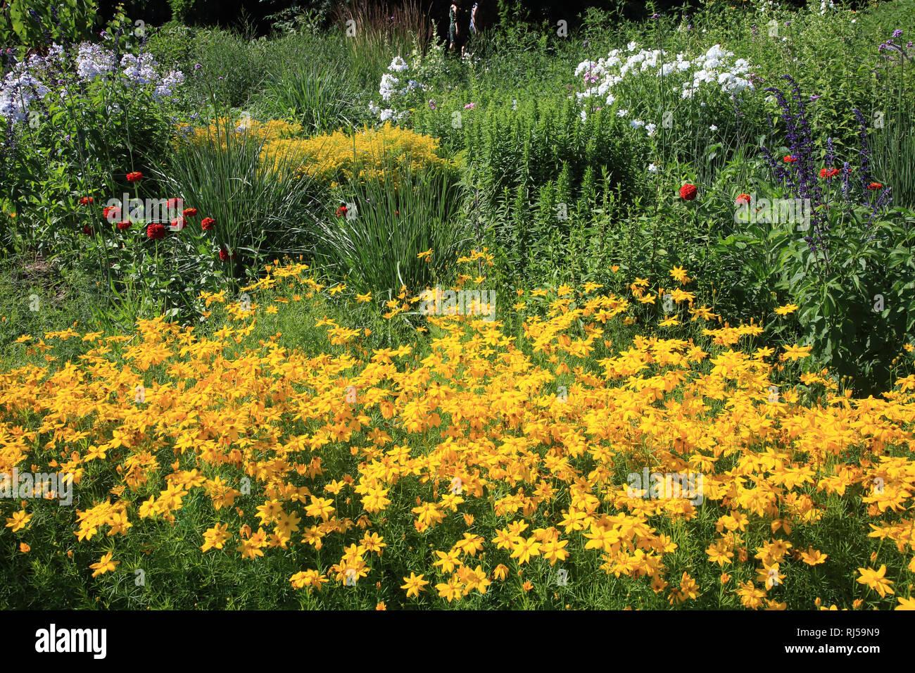 Garten im Sommer mit Sonnenhut - Stock Image