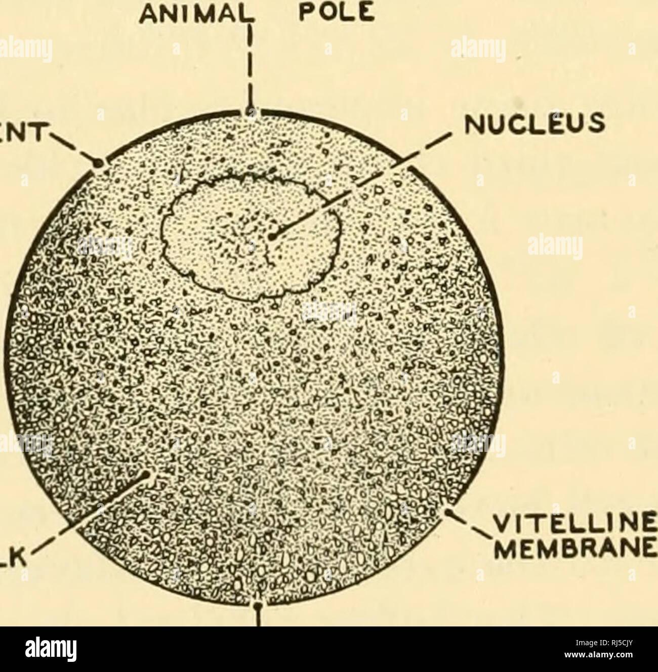 Chordate Anatomy Chordata Anatomy Comparative Pigment Nucleus