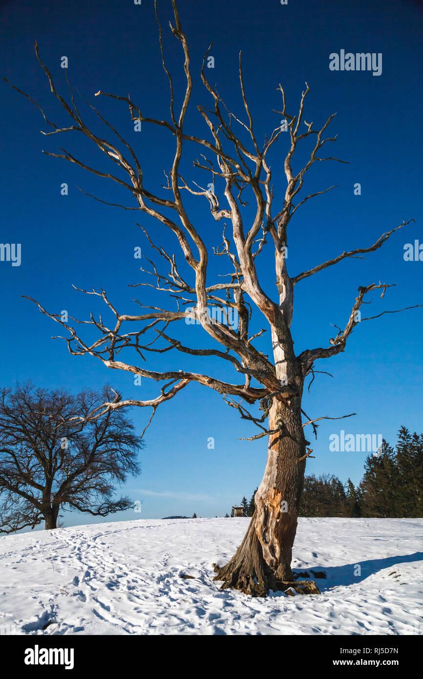 Äste eines toten Baumes strecken sich dem blauen Himmel entgegen - Stock Image