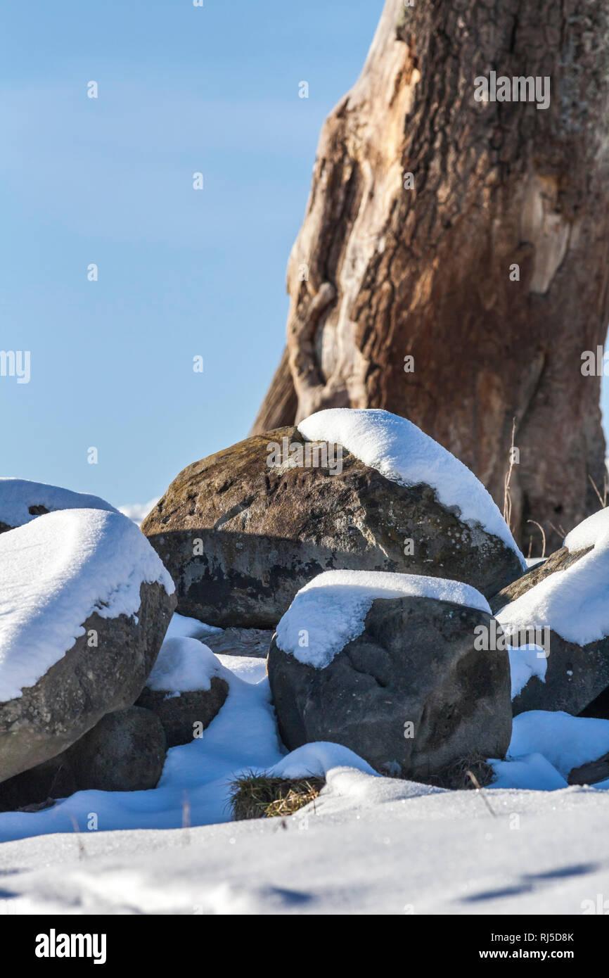 Große schneebedeckte Steine liegen vor einem abgestorbenem Baum - Stock Image