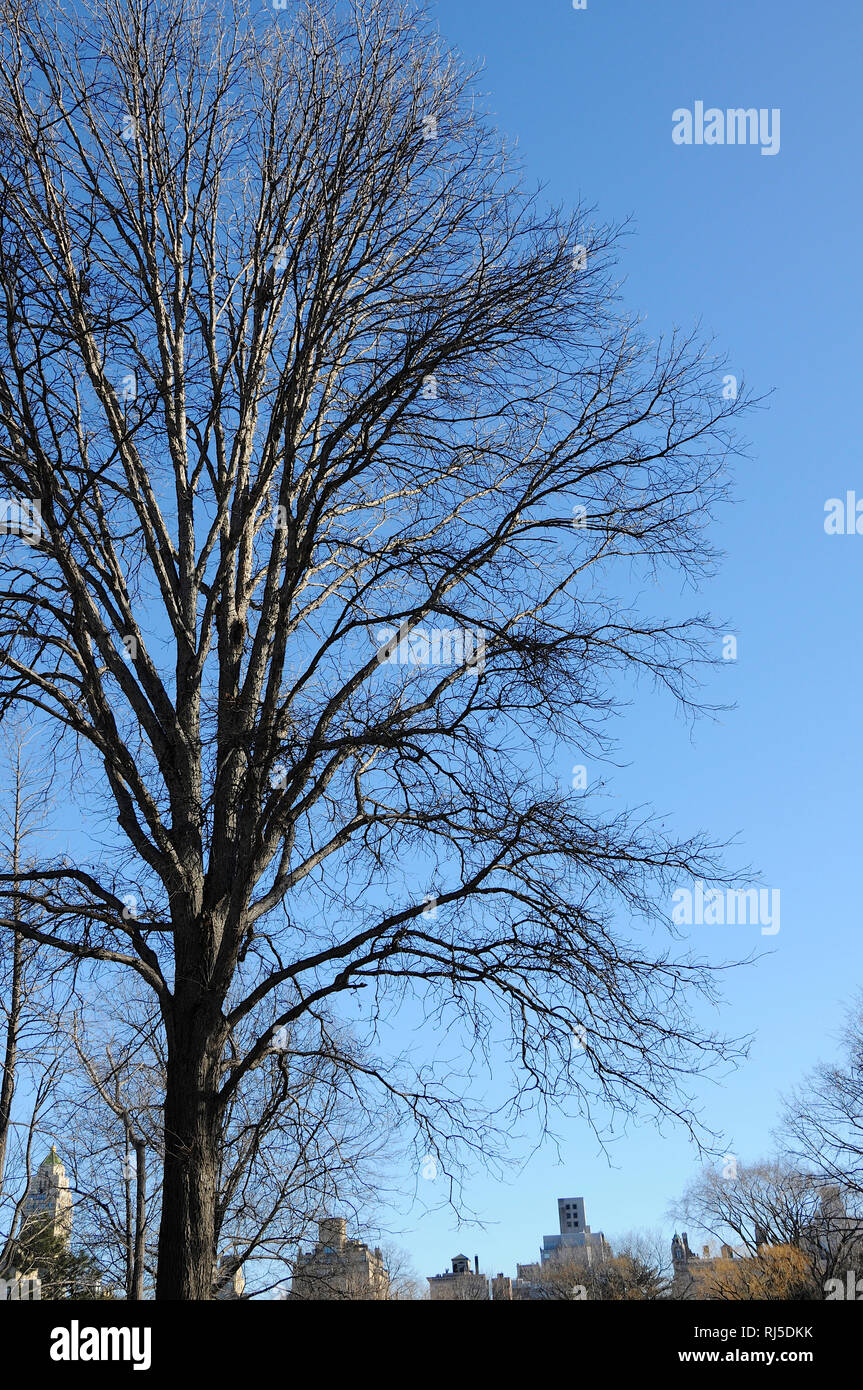 A tangle of branches from winter trees hibernating in winter set against the sky. - Stock Image