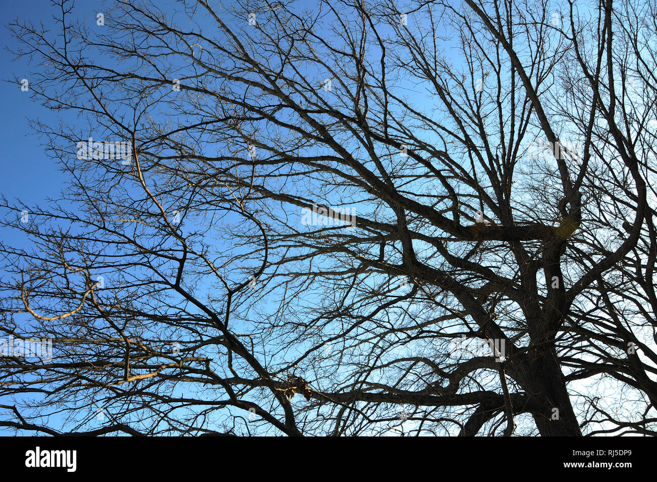 A tangle of branches from winter trees hibernating in winter set against the sky. Stock Photo