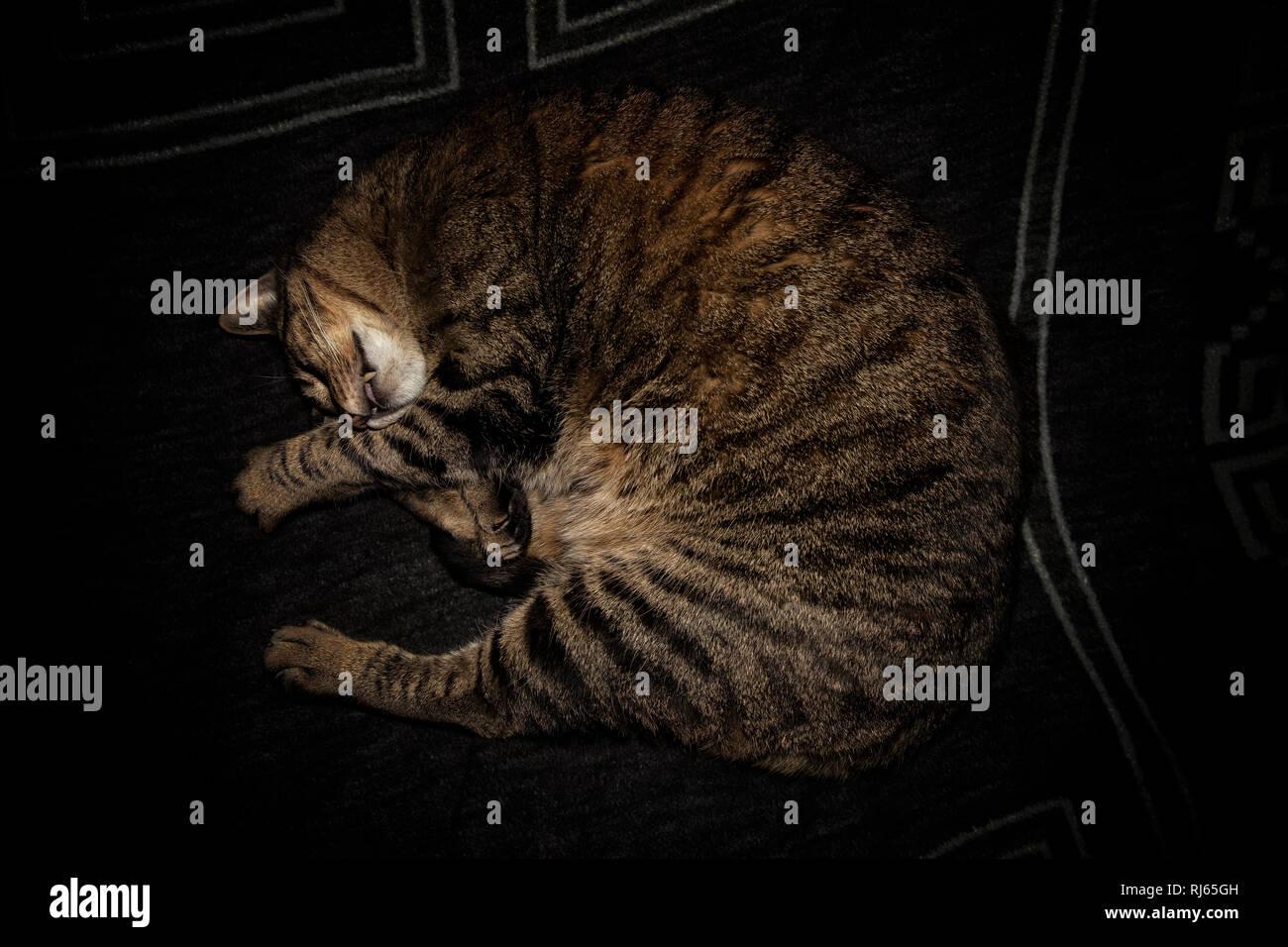 Schlafende Katze auf Sofa - Stock Image