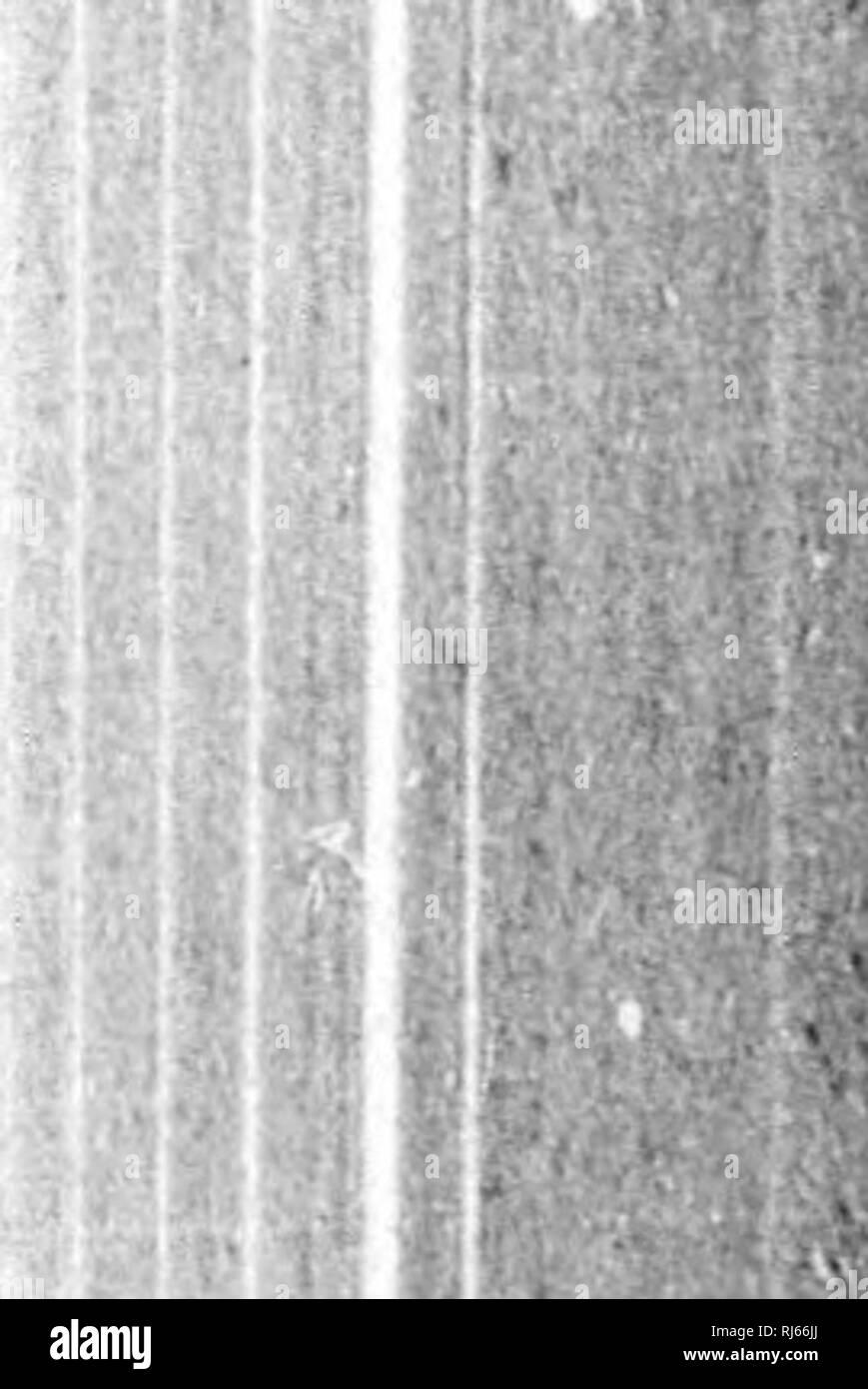 ". The water birds of North America [microform]. Birds; Water-birds; Oiseaux; Oiseaux aquatiques. LAHID.K âTllK (JILI.S ANH TKHNS â RISSA. '20] Rissa breviroBtris. THE SEO-LEGOED KITTIWAKE. Einsn Hi'nvT, (""Jray, (umi. B. 111. 184') (tint of Talias, IS'Jti). I.awk. in Hainrs H. Jf. Am. IS.IS S;').'!. â KLi.mr, lllnstr. Am. 11. pi. ;>i. Ijinis Imu-liifrliimcliiut, Ooim.p, 1*. Z. S. 184;?, lOii; Zool. Voy. SiiliOi. r>0, pi. ;U (not of liuiiAKHsos, 1831). Lini.i {liiss(i) liivriivstn'.i, "" lliiAMir,"" Hurcii, ,1. f. O. 18.'i;l, â¢.V'n;'). â Cm is, 11. N. W. I8;""t. (Hi. lUxA - Stock Image"