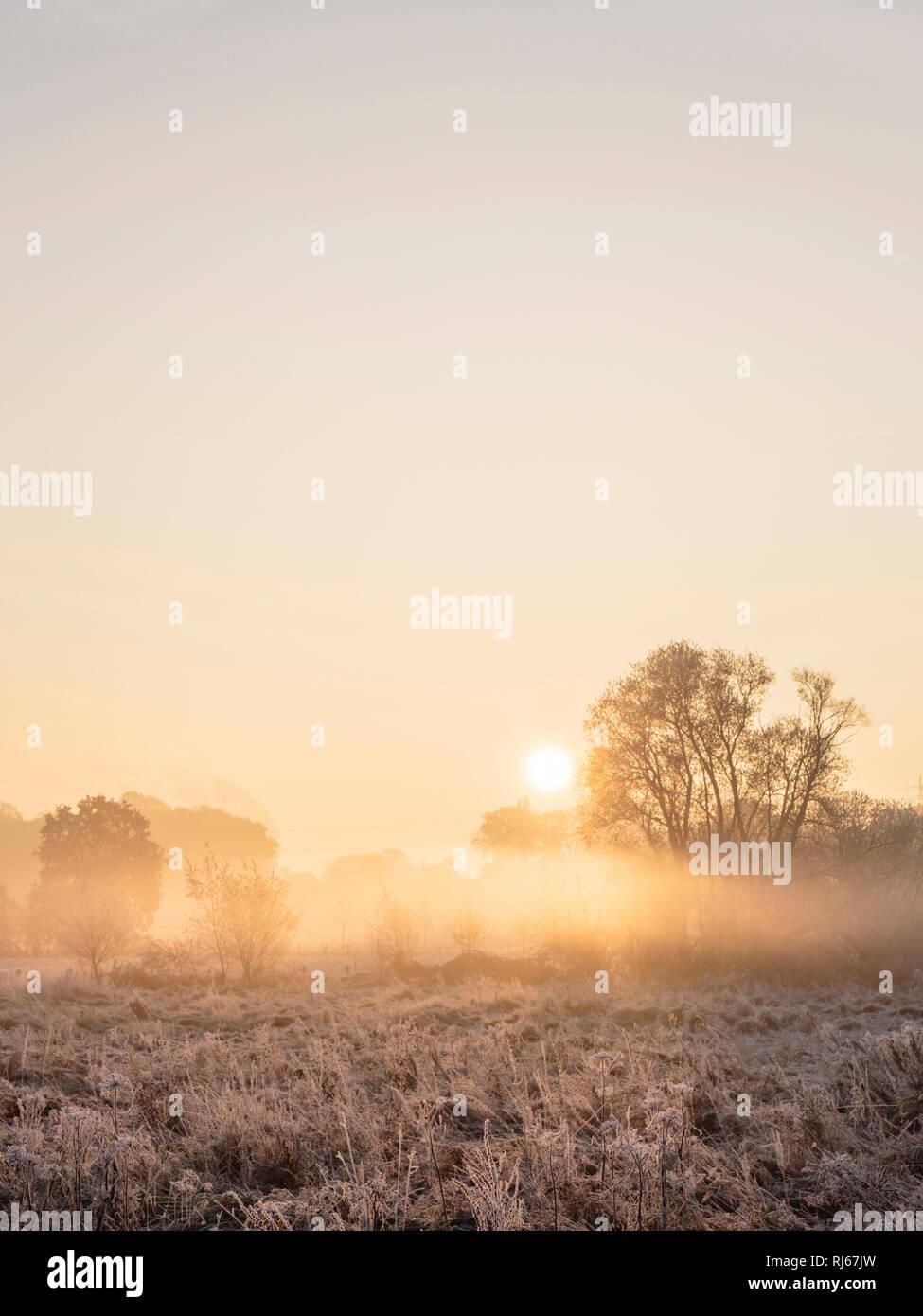 Europa, Deutschland, Nordrhein-Westfalen, Bielefeld, Sonnenaufgang über den vom Frost überreiften Wildwiesen am Obersee - Stock Image