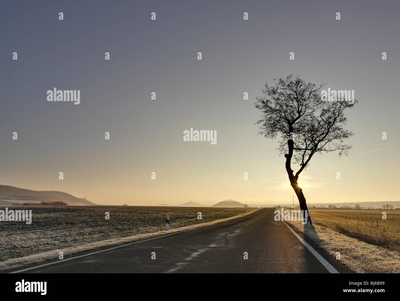 Deutschland, Thüringen, Mühlberg, Drei Gleichen, Straße, Baum, Sonne, Gegenlicht - Stock Image