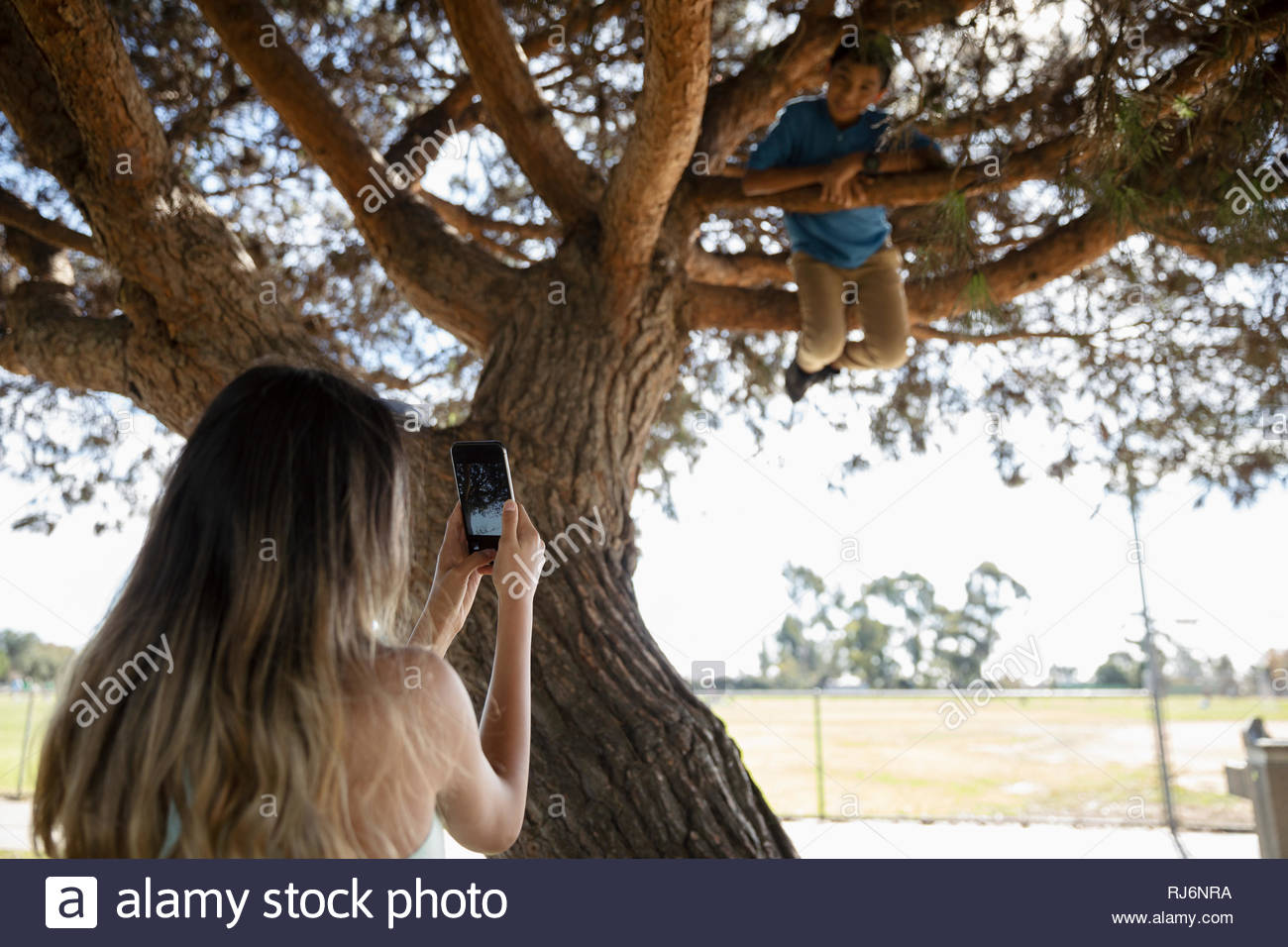 Girl with camera phone photographing brother climbing park tree - Stock Image