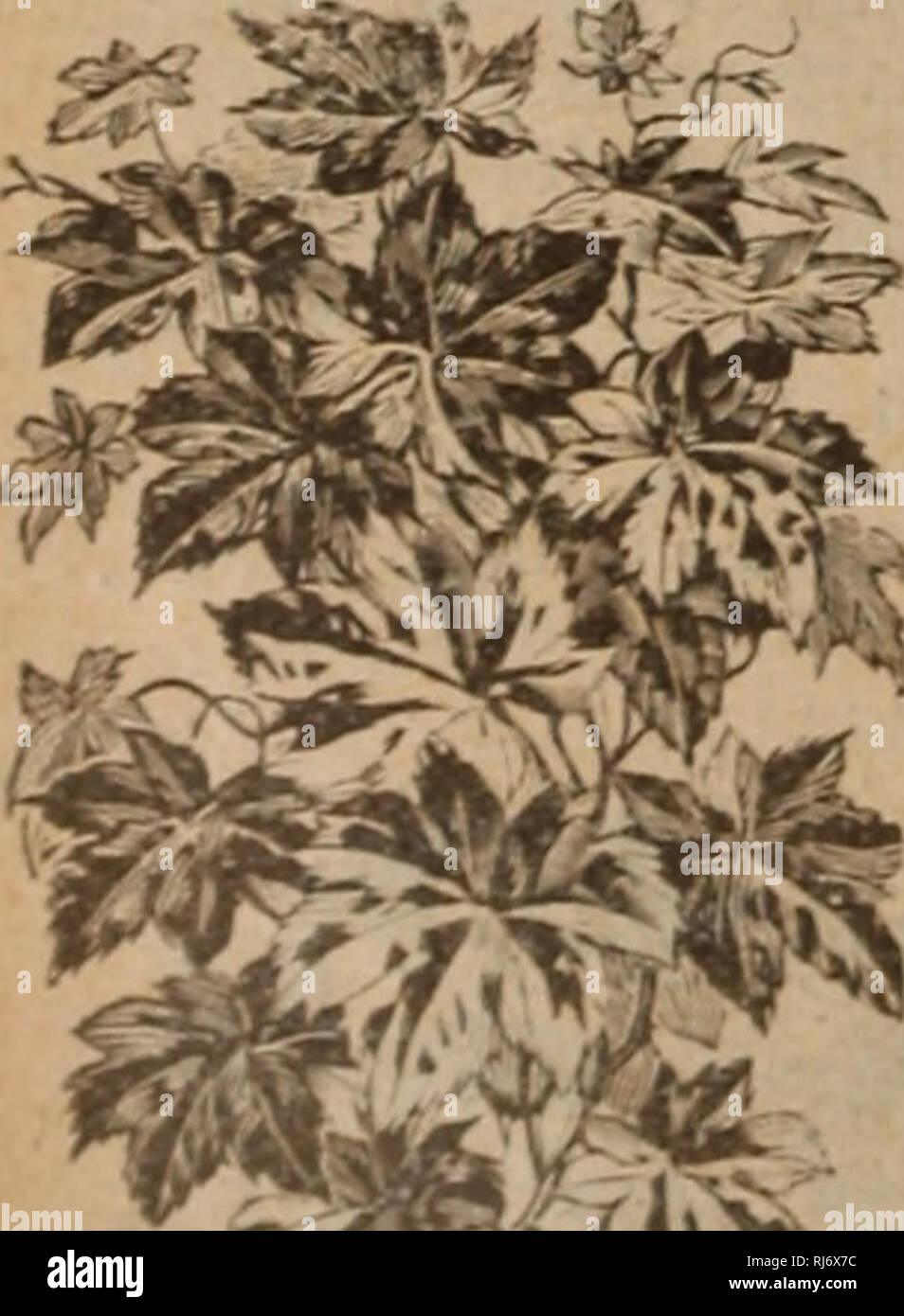 Childs' rare flowers vegetables and fruits. Commercial catalogs Seeds; Nurseries (Horticulture .