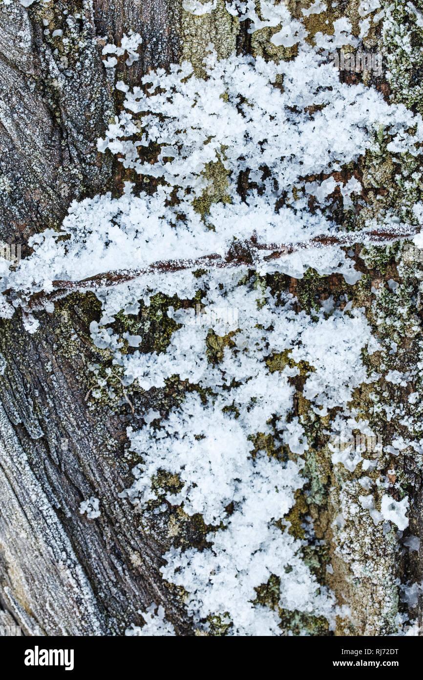 Holz mit Raureif bedeckt - Stock Image