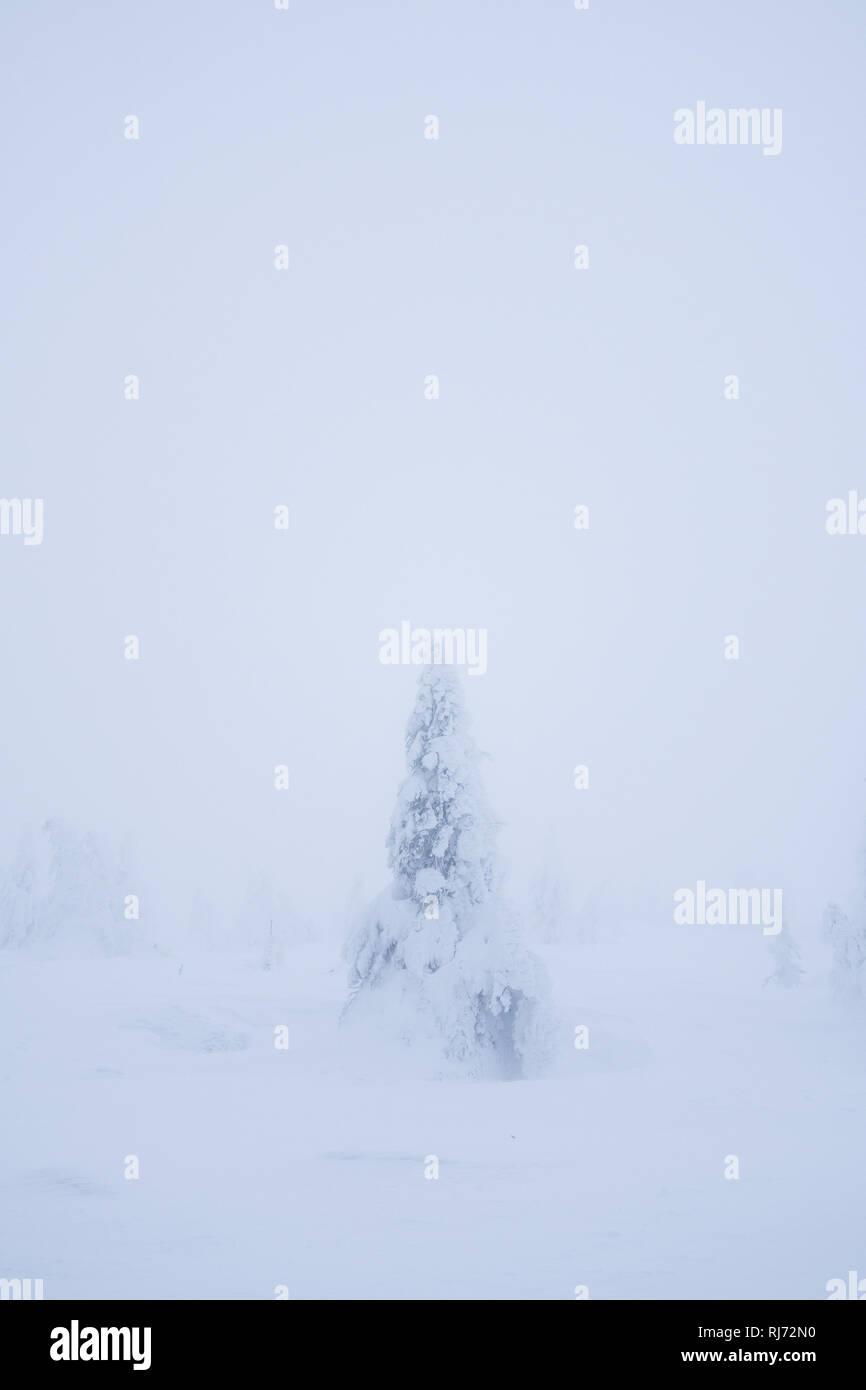 Baumskulptur im Winter, Brocken, Harz, Schierke, Deutschland Stock Photo