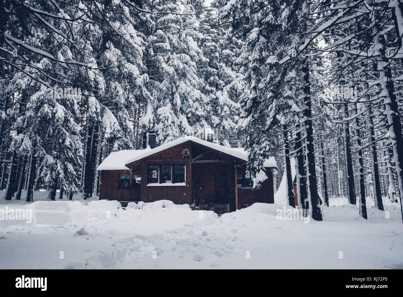 Hütte im Wald, Winter, Harz, Schierke, Deutschland - Stock Image