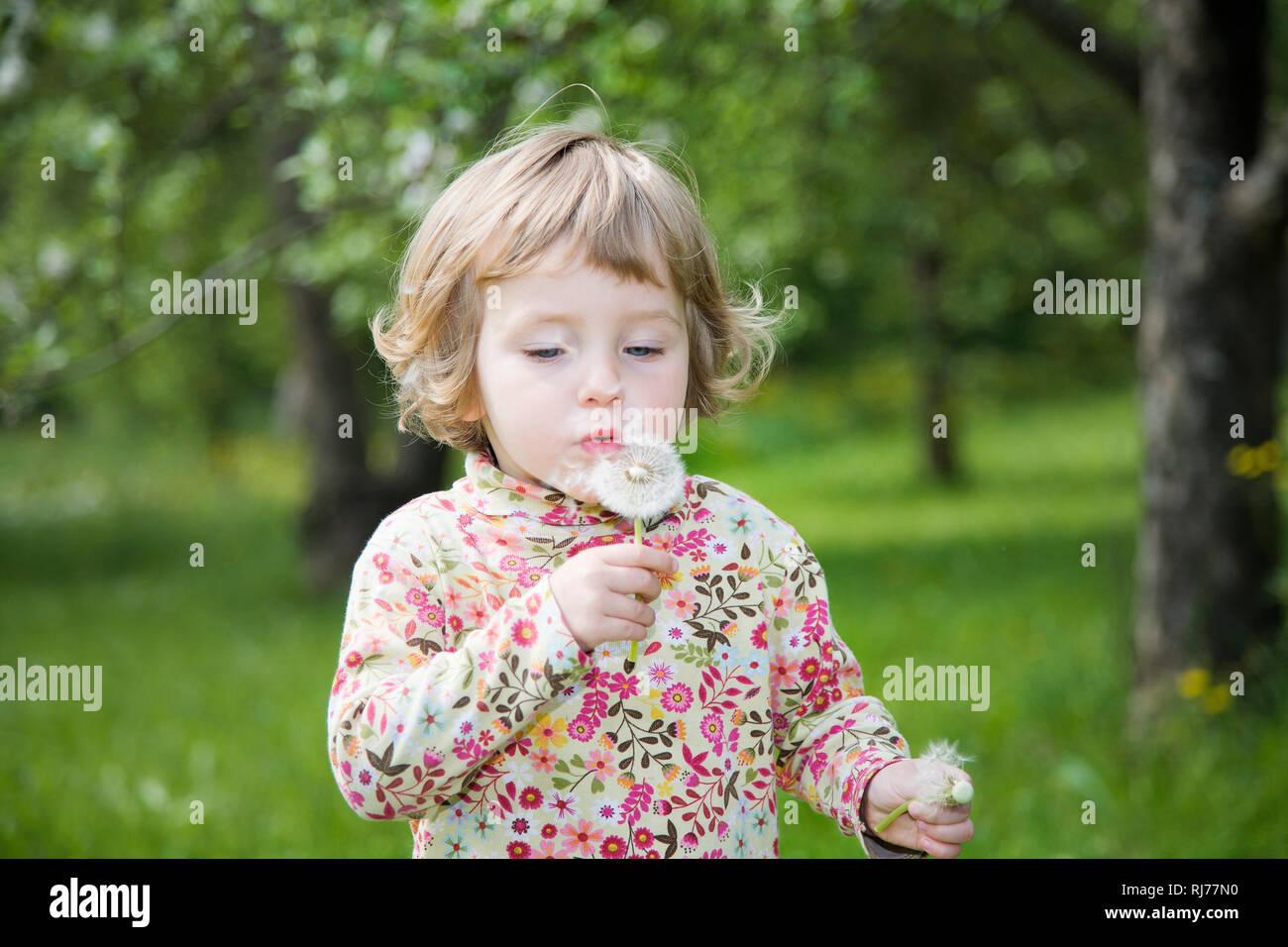 Mädchen, 3 Jahre alt, mit Pusteblume Stock Photo