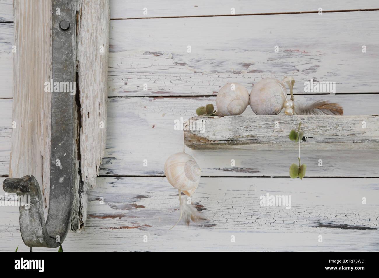 Schneckenhäuser und Federn als Deko auf Vintage-Regal, gusseiserner Haken, Close-up - Stock Image