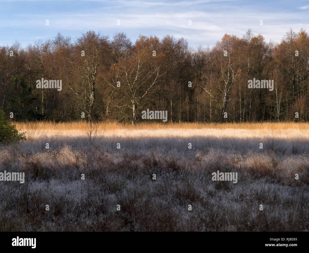 Deutschland, Bayern, Naturpark Bayrische Rhön, UNESCO-Biosphärenreservat, Naturschutzgebiet Schwarzes Moor, Birken und Moorgräser Stock Photo