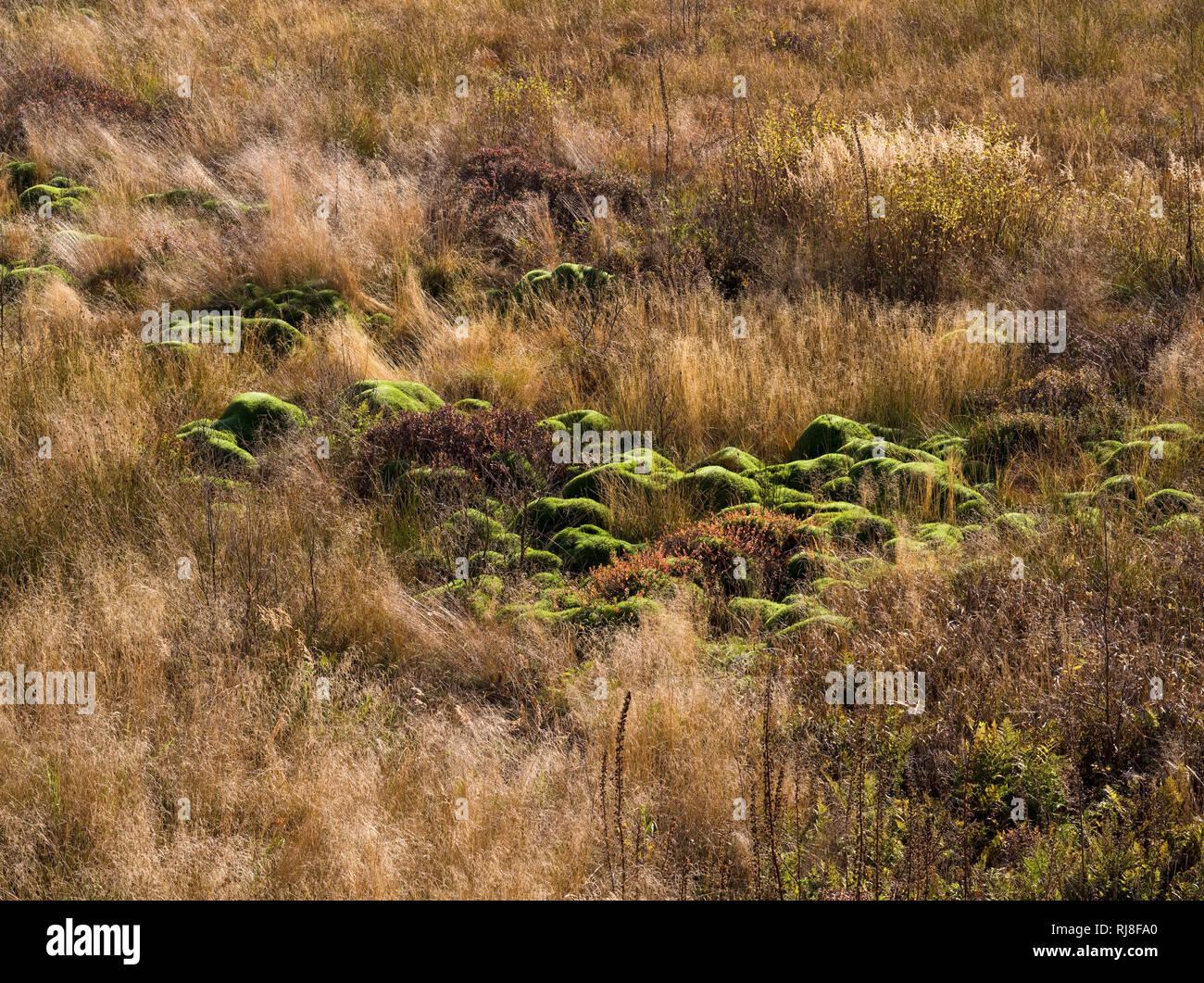 Deutschland, Hessen, Naturpark Hessische Rhön, UNESCO-Biosphärenreservat, Moospolster und Riedgräser im Roten Moor, Herbst Stock Photo