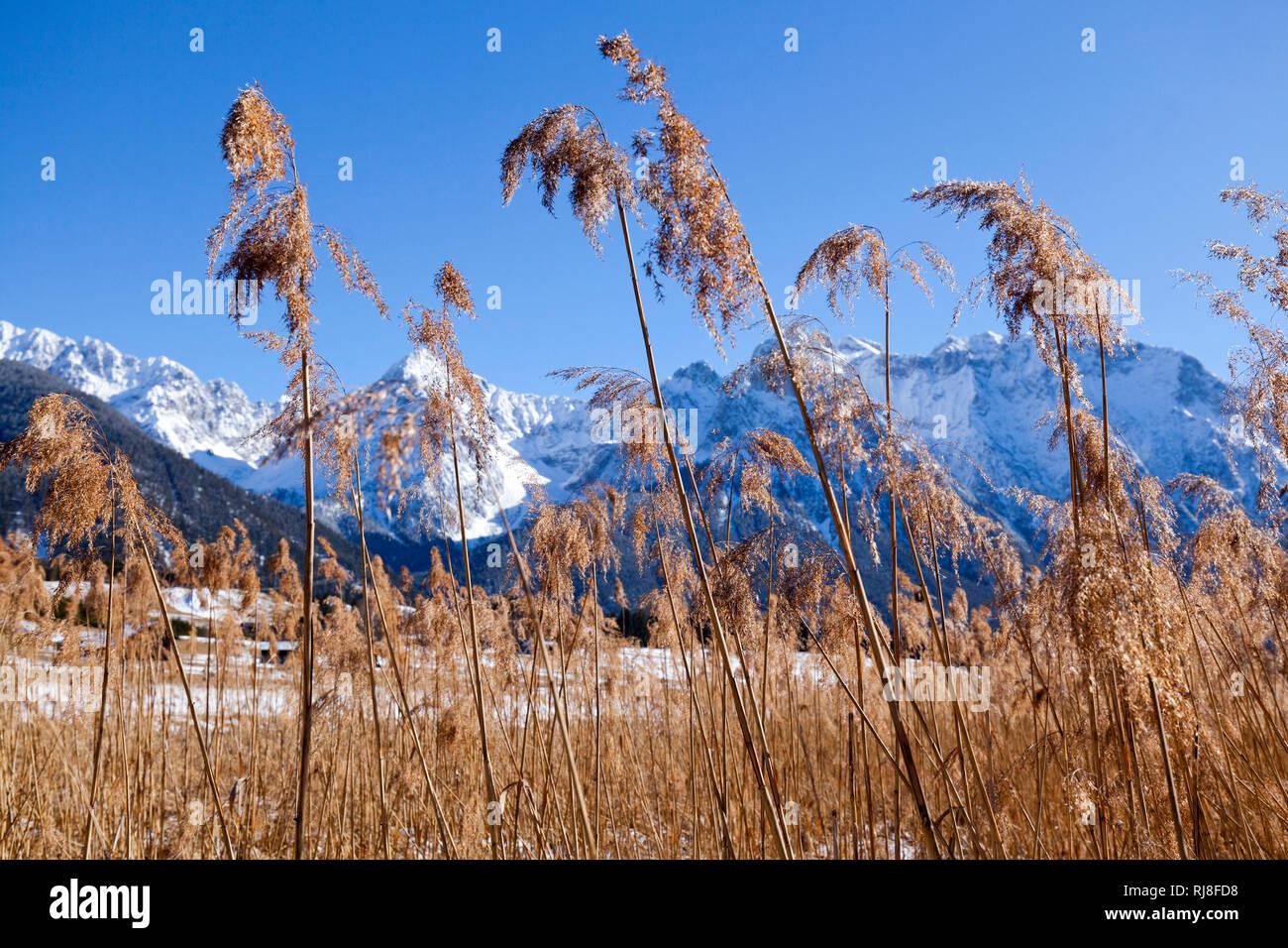 trockenes Schilfrohr am Bergsee Stock Photo