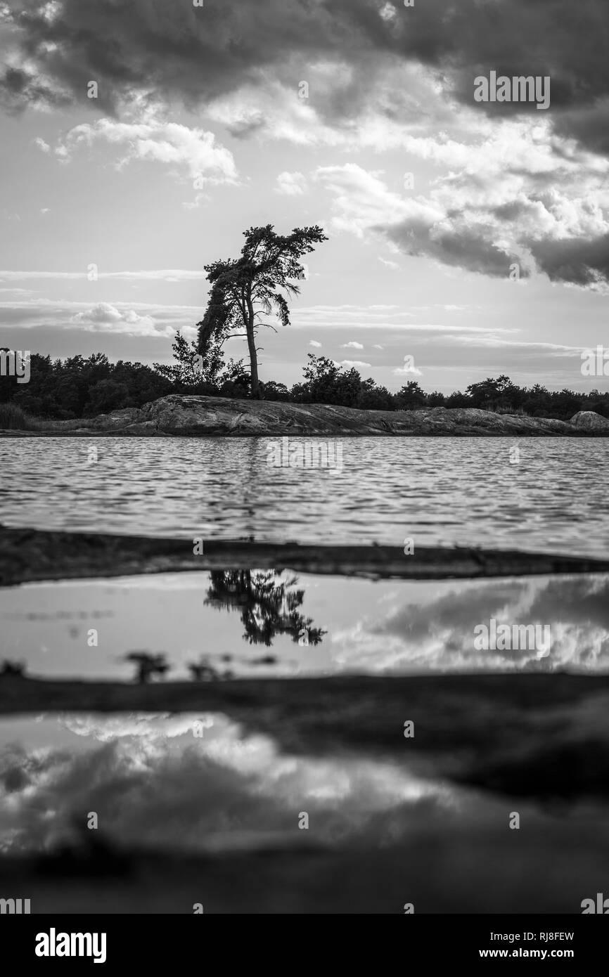 einzelner Baum auf schwedischer Schäre, s/w - Stock Image