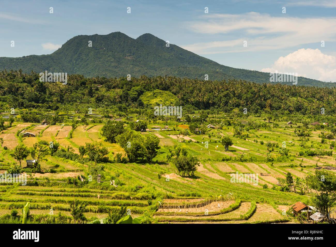 Reisterrassen bei Amlapura - Stock Image