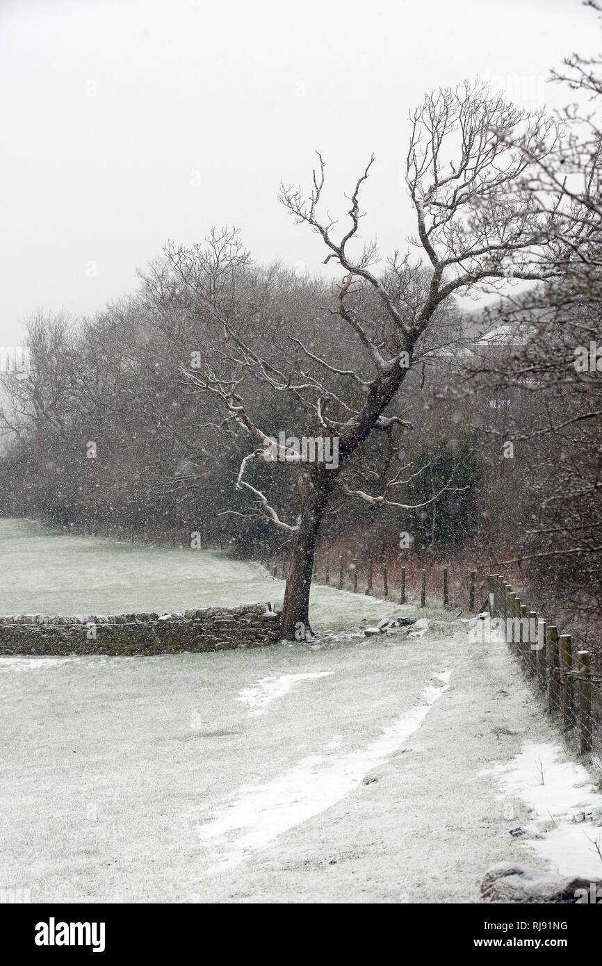 Snowing in Farnley Tyas, Sunday 21st January 2018. - Stock Image