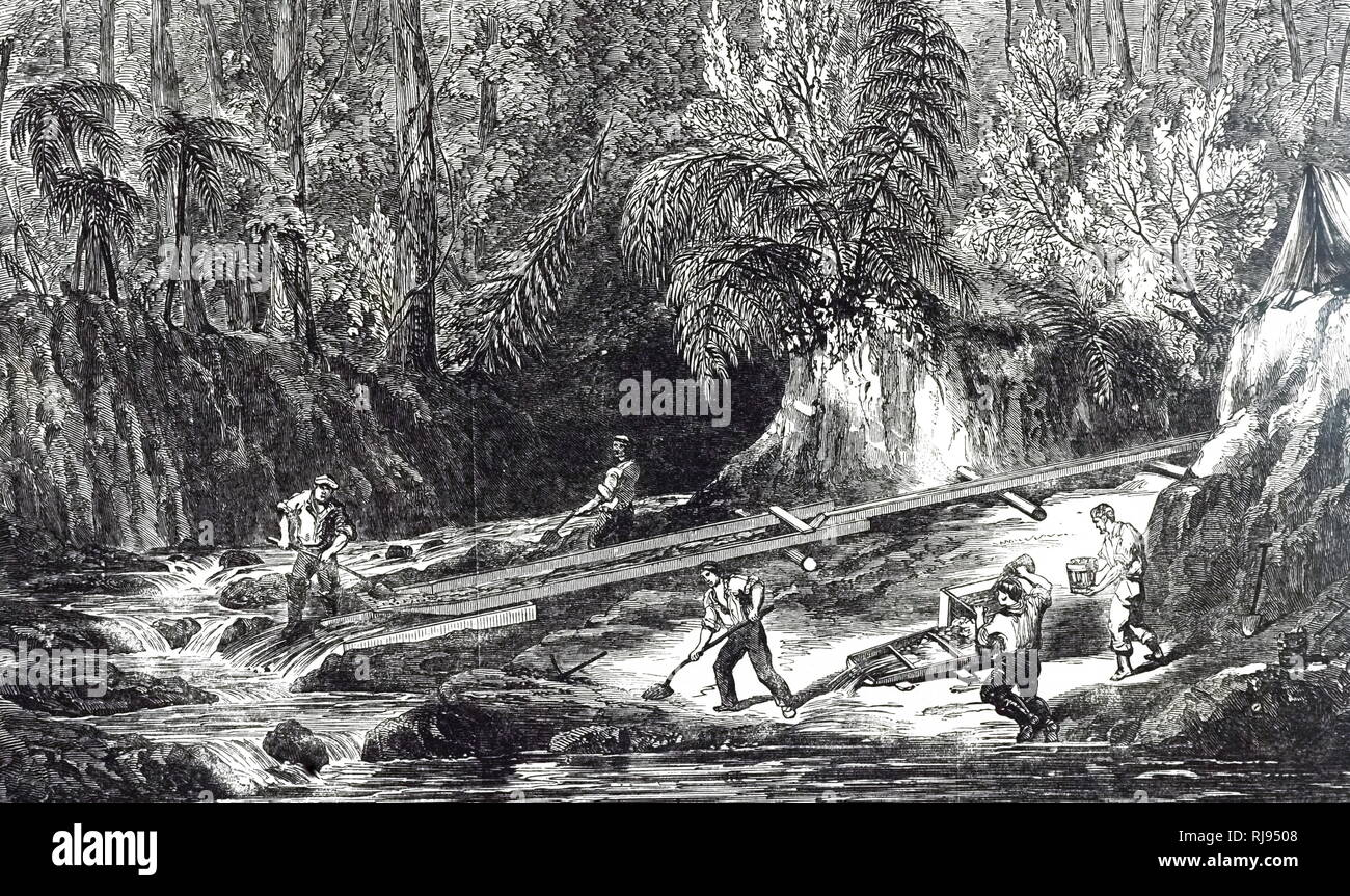 An engraving depicting men washing for gold in the New Zealand Gold Fields. Dated 19th century - Stock Image