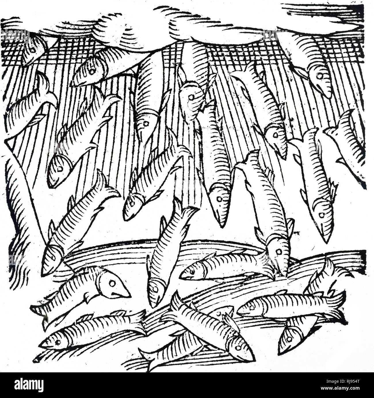 A woodcut engraving depicting the rain of fishes which occurred in Saxony in the year 989. Dated 16th century - Stock Image