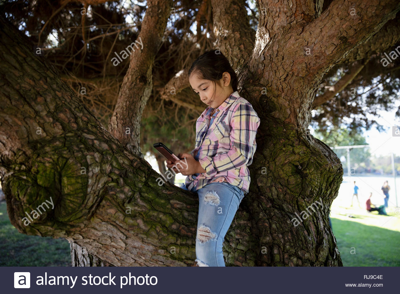 Latinx girl using digital tablet in park tree - Stock Image