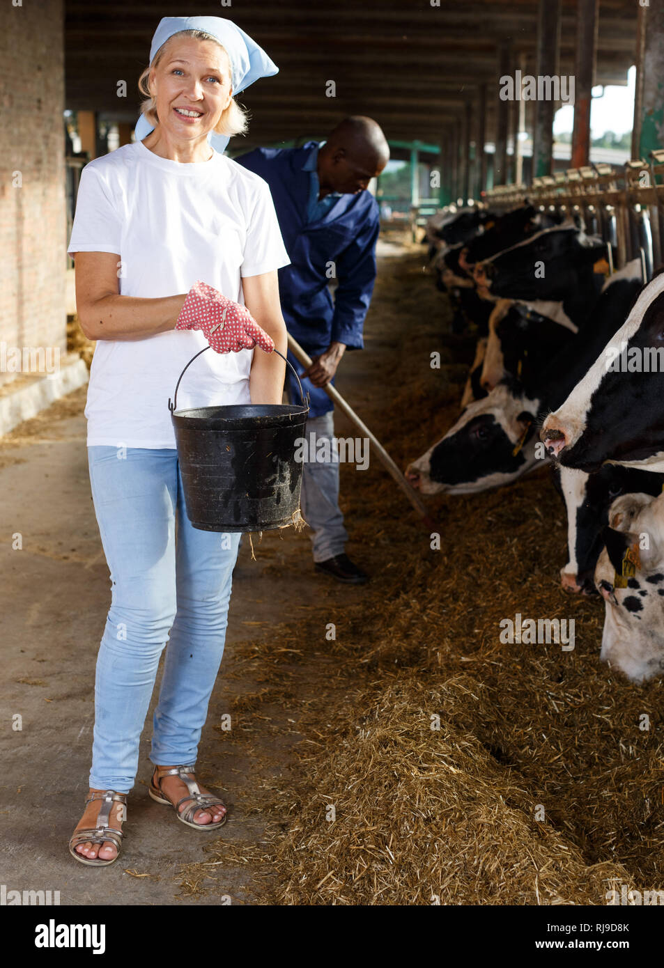 Portrait of smiling mature woman farmer taking care  cows at the cow farm - Stock Image