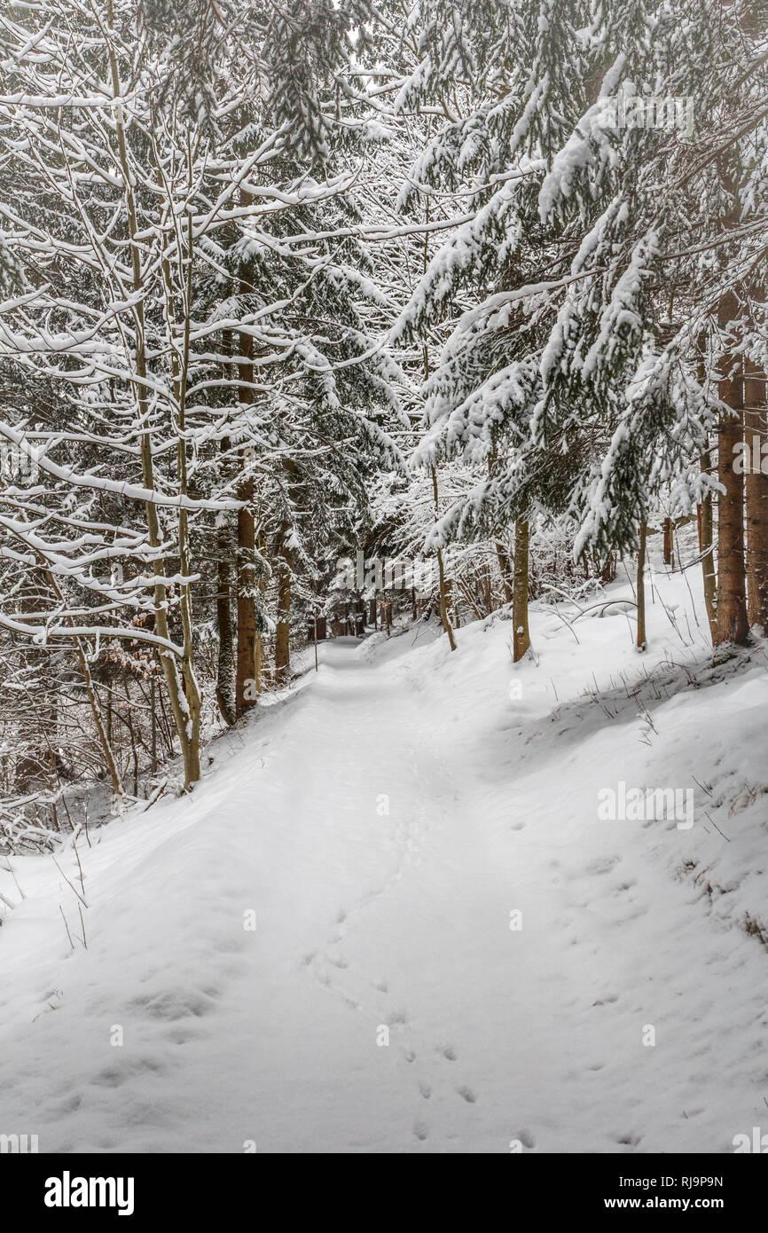 Waldweg im Winter Stock Photo