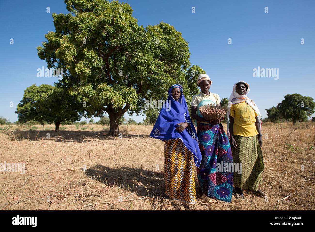 Yarsi village, Yako, Members of the Village Tree Enterprise Shea Group, with shea nuts in front of a shea trees. Stock Photo