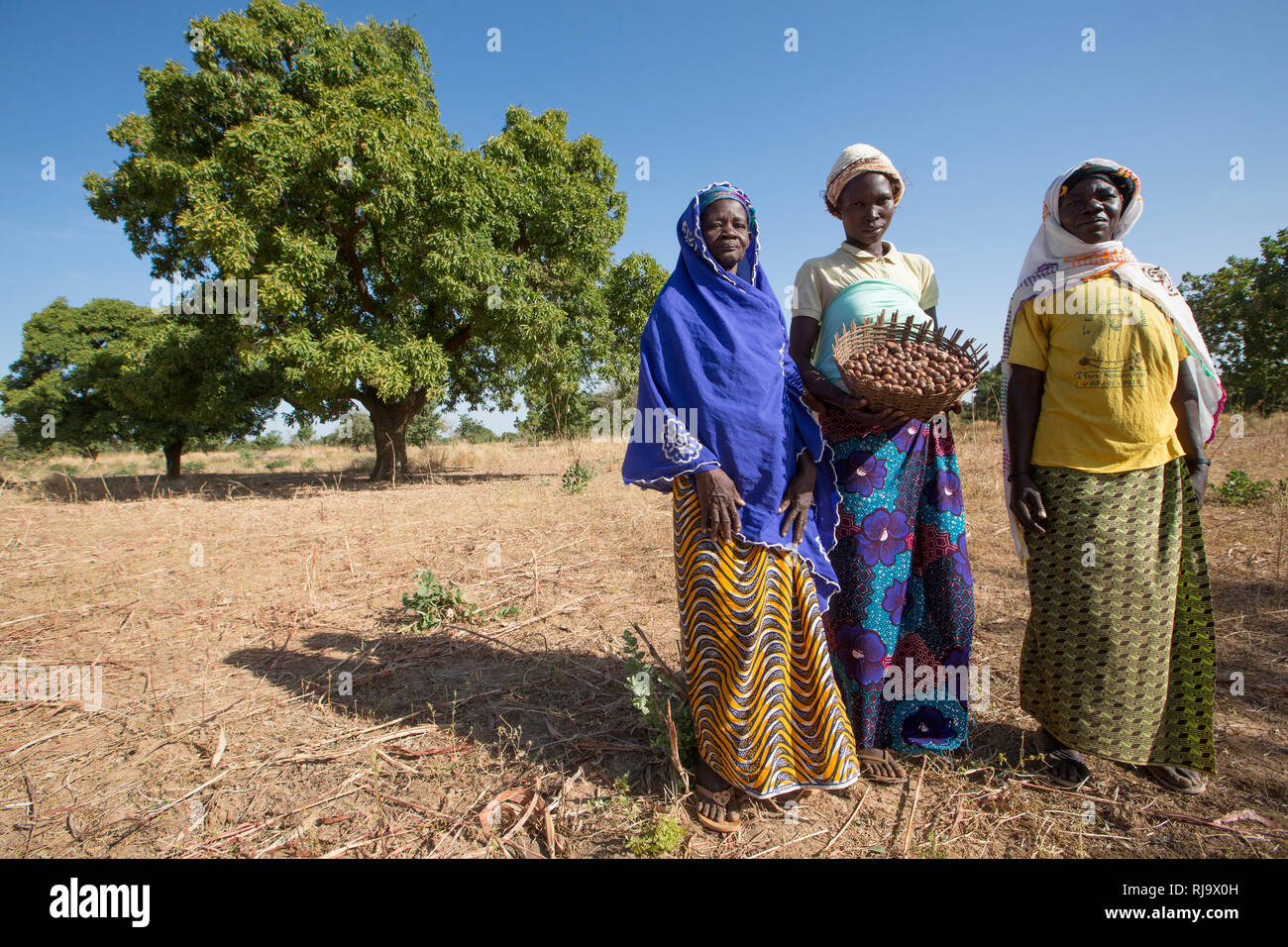 Yarsi village, Yako, 1st December 2016; (Left  to Right) Rasmata Simpone, 60, Leontine Ouedraogo, 31, and Bintou Sankana, 50, all members of the Village Tree Enterprise Shea Group, with shea nuts in front of a shea tree where they collect a large quantity of shea nuts. Stock Photo