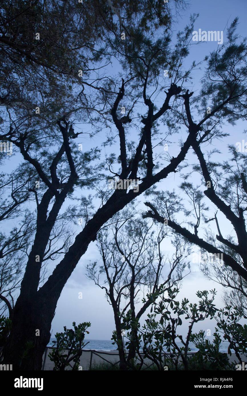 Blick durch Bäume zum Abendhimmel - Stock Image