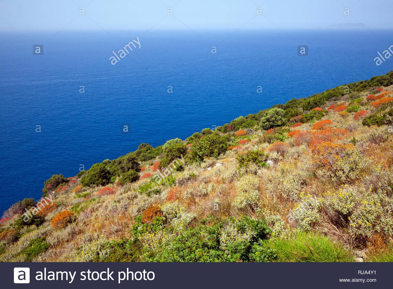 Macchia wächst auf Steilhang über dem Meer in Griechenland - Stock Image