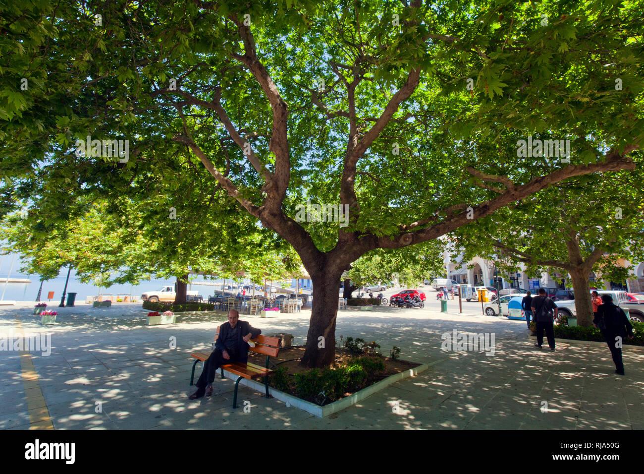 Männer sitzen im Schatten von mächtigen Platanen in Griechenland - Stock Image