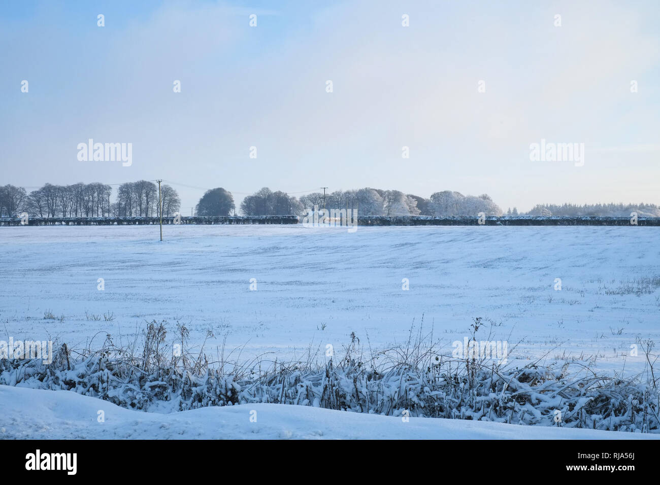 Snow cover fields, Lymington Bottom Road, Medstead, Alton, Hampshire, England ,United Kingdom. - Stock Image